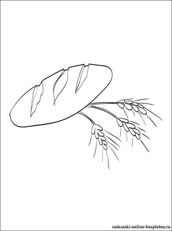 раскраска колосья хлеба раскраска колосьев пшеницы